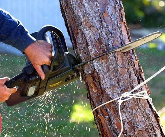 Спил деревьев в Ставрополе и Ставропольском крае
