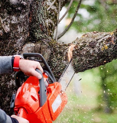 Услуга по спиливанию деревьев в Ставрополе